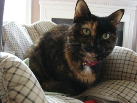 cradle-cat.jpg