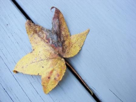 yellow-deck-leaf